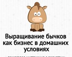 Выращивание бычков как бизнес в домашних условиях