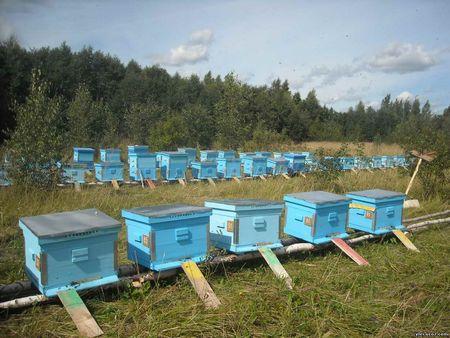 Разведение пчёл