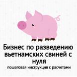 Бизнес по разведению вьетнамских свиней с нуля