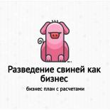 Разведение свиней как бизнес с чего начать как преуспеть