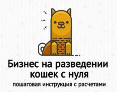 Бизнес на разведении кошек с нуля. Пошаговая инструкция
