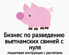 Бизнес по разведению вьетнамских свиней с нуля. Бизнес-план свинофермы