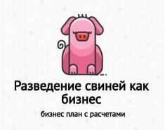 Бизнес-план разведение свиней. Пример