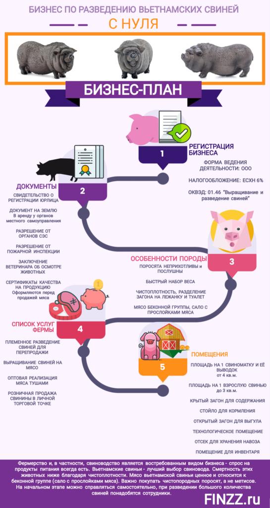 biznes-po-razvedeniyu-vetnamskih-svinej